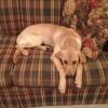 Blindfaith Dogs Around the U.S.A.