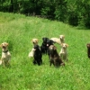 Blindfaith Retrievers at Home & Play