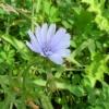 Wild Flower and Native Prairie Grasses
