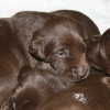 Lily\'s First Litter 2011