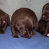 Lily\'s Litter 2012