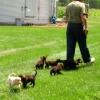 Puppies 2006