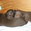 Sophie's Pups 2008